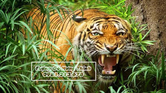 Hổ trong tự nhiên